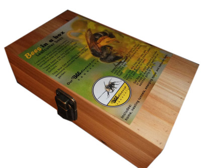 611.30 Summer Leafcutter Bees in a Box-includes bees